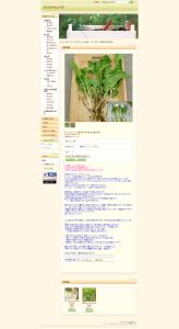 山菜の苗  冬の山菜 - ホースラディシュ(西洋わさび)苗120g - 【北の山菜Web3号店】天然山菜、無農薬育成苗、自然素材販売。