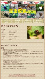 昆虫教室-カメノコテントウ-昆虫図鑑 2013-11-17 18-46-31