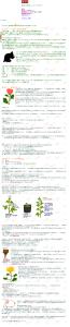 菊 キク 育て方 栽培  イラスト