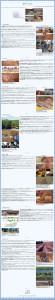 有機自然農法(炭素循環農法)の実際4 2013-09-29 22-25-28