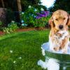 お犬天国フランスに昔から伝わる、ペットを優しく清潔に保つ方法 | MYLOHAS